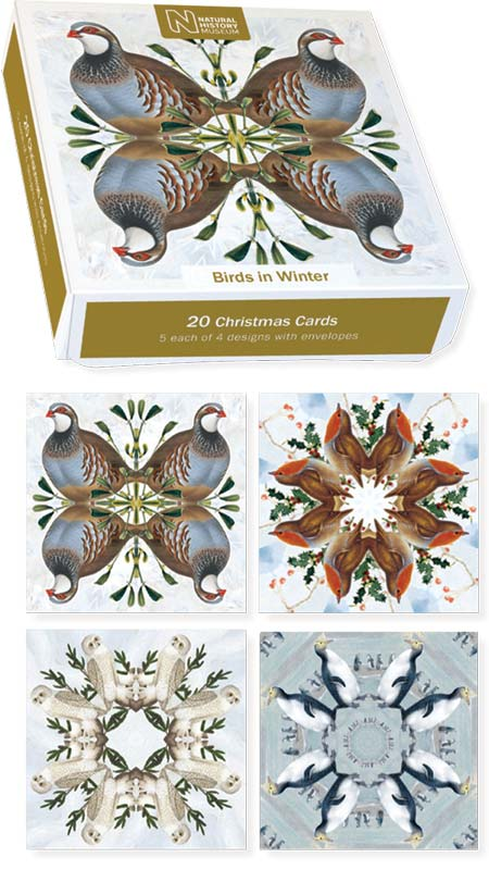 Museums & Galleries - Birds of Winter - Boxed Cards #XET219