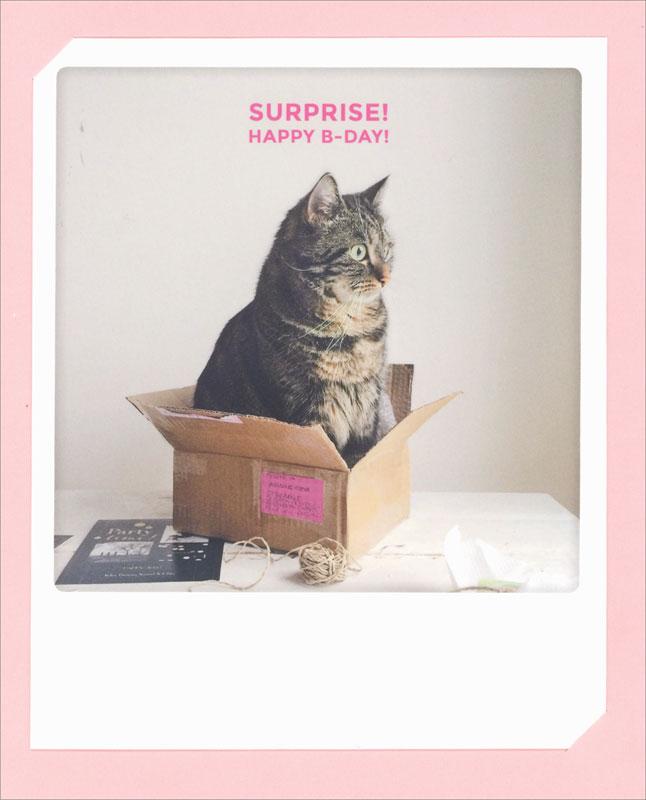 Pickmotion Cat Birthday Card Zg0175