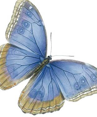 Blue Butterfly - Blank Card