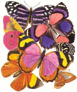 Butterflies 1 - Blank Card