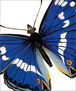 Purple Emperor Butterfly - Blank Card