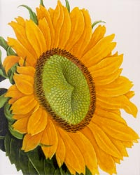 Sunflower - Blank Card autumnal,autumn,fall