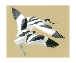Avocets Chasing - Blank Card