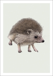 Hedgehog - Blank Card