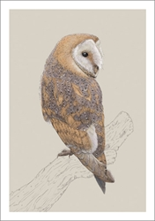 Barn Owl - Blank Card