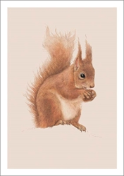 Red Squirrel - Blank Card