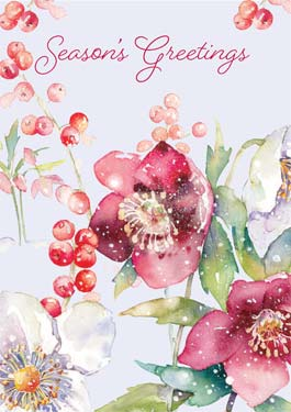 Hellebore in Snow - Christmas Card Christmas