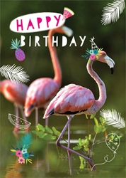 Flamingos - Birthday Card