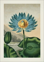 Blue Waterlily - Blank Card