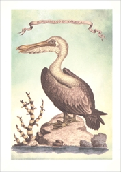The Pelican of America - Blank Card Blank