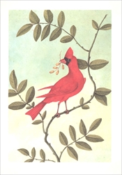 The Red Bird of South Carolina - Blank Card Blank