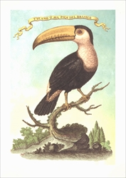 Toucan on the Branch of a Tree - Blank Card Blank