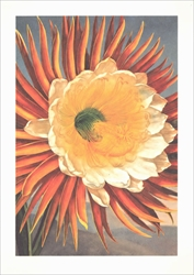 The Night Blooming Cereus - Blank Card Blank