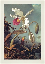 White Orchid - Blank Card