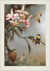 Hummingbird / Butterfly - Blank Card