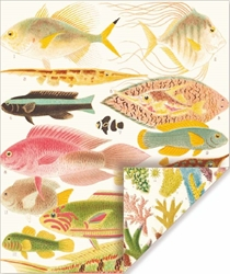 Great Barrier Reef - Double Sided Sheet Gift Wrap