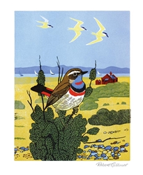Bluethroat - Blank Card