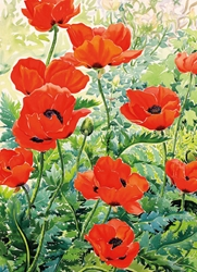 Garden Poppies - Blank Card
