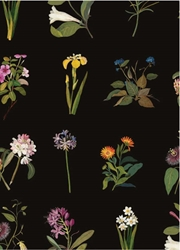 Delany Flowers  - Sheet Gift Wrap