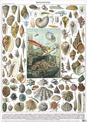 Natural History Museum Mollusques  - Sheet Gift Wrap