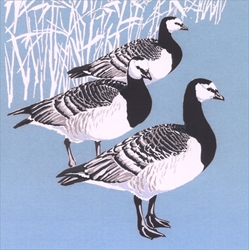 Barnacle Geese - Cello Packs Christmas