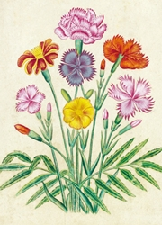 Painting of Dianthus - Blank Card
