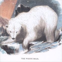 White Bear - Cello Packs Christmas