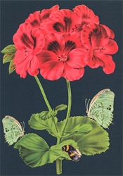 Bee and Green Butterfly - Blank Card Blank
