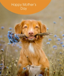 Dog with Flowers - Mothers Day Card
