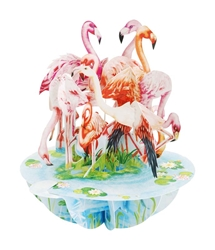 Flamingos - Display Card