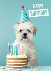 Dog with Cake - Birthday Card